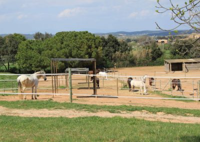 pony-club-emporda-IMG_2819