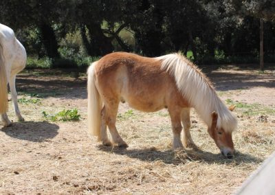 pony-club-emporda-pony-shinchan