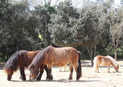 pony-club-emporda-pony-trio