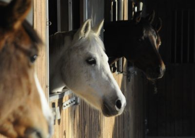 pony-club-emporda-ponys-box2.jpeg